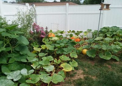 Pumpkin-Patch1